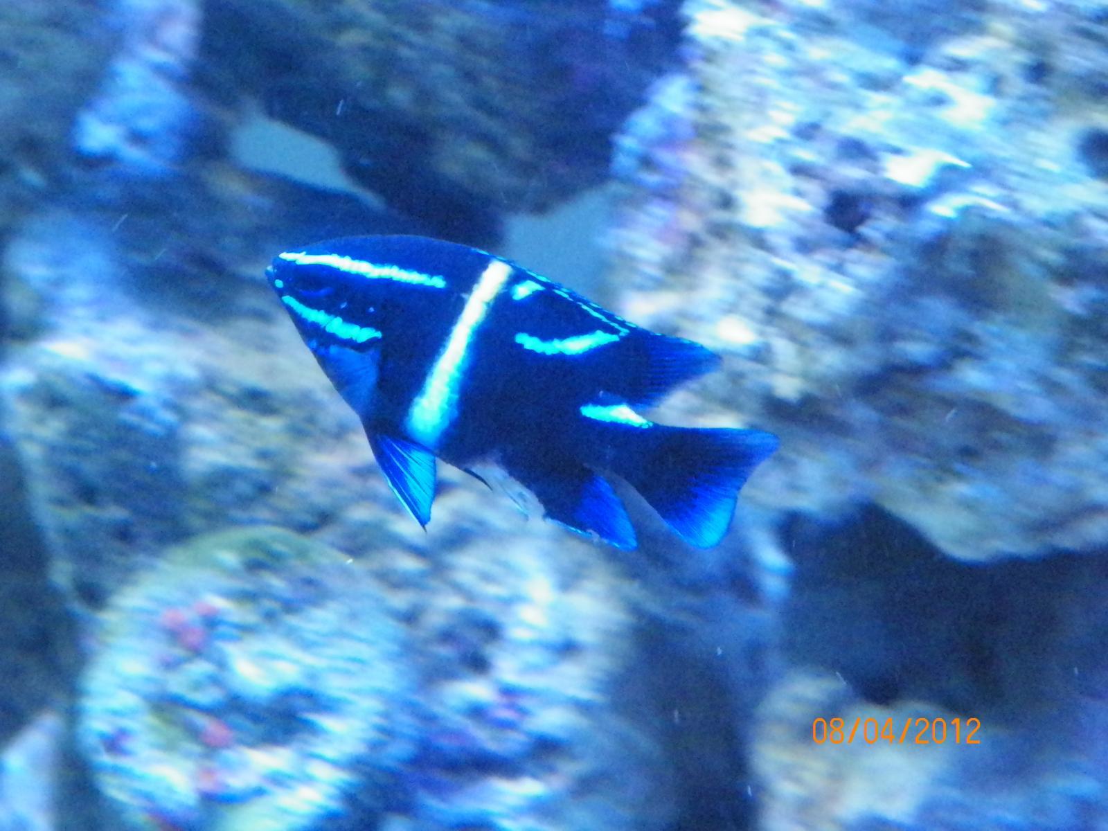 My 125 Gallon Reef Aquarium