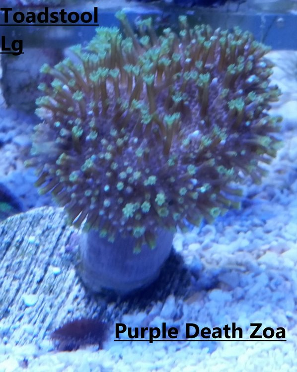 Toadstool and Death Zoa.jpg