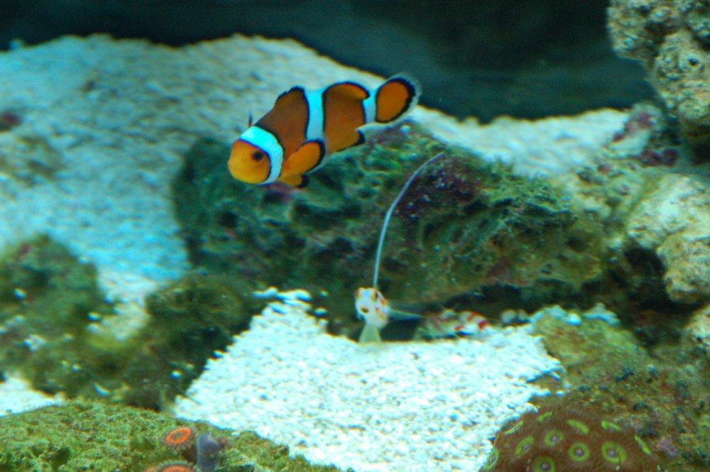Yasha & Shrimp.jpg
