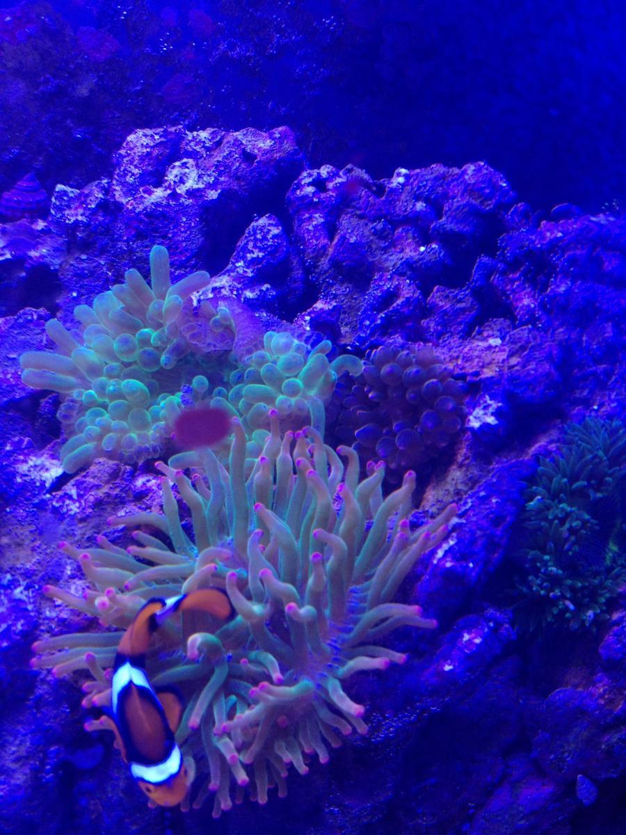 Wolfe's Reef