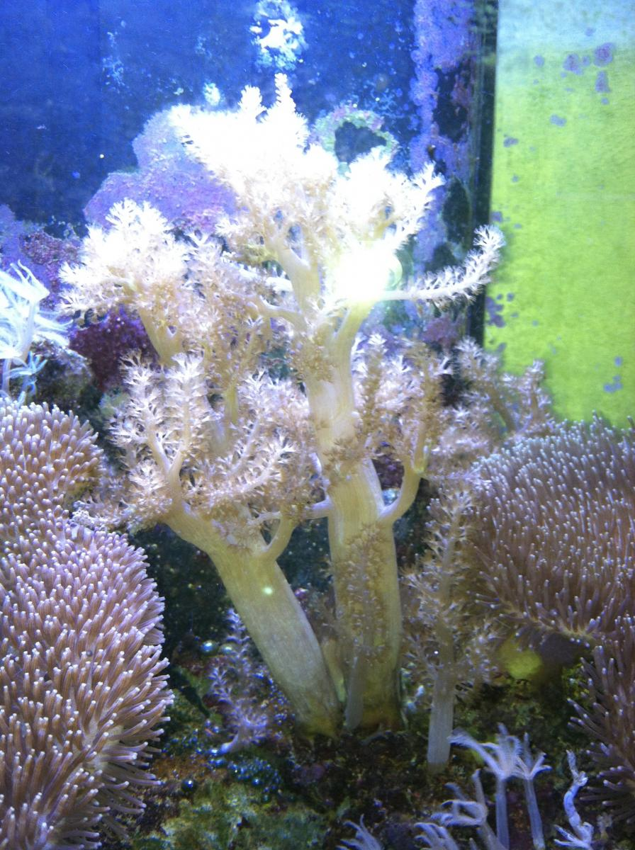 Suzie's Leather corals