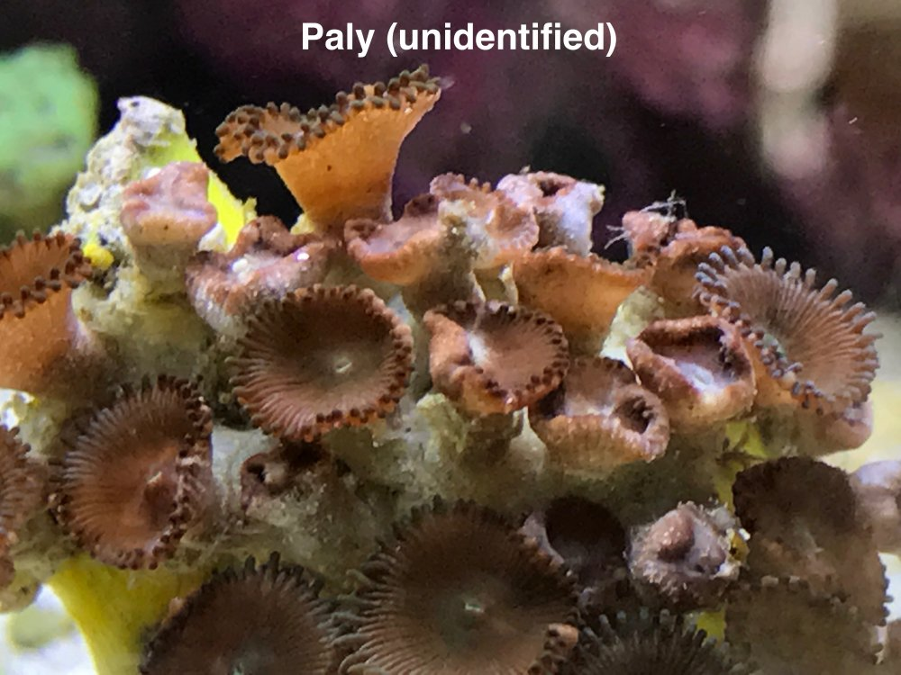 Unidentified Paly 9.jpg
