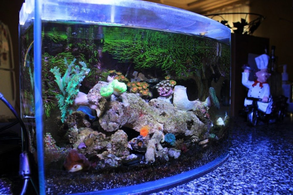 Mr Aqua 03-01-19.jpg